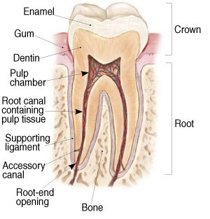 Conroe Root Canal Treatment